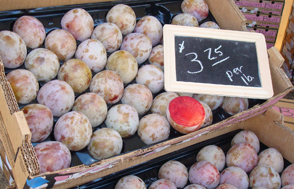 Elephant Heart plums from Blossom Bluff Orchards in Fresno