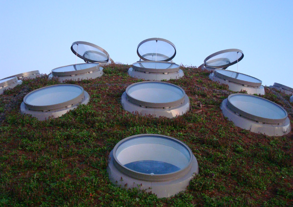 The living roof.