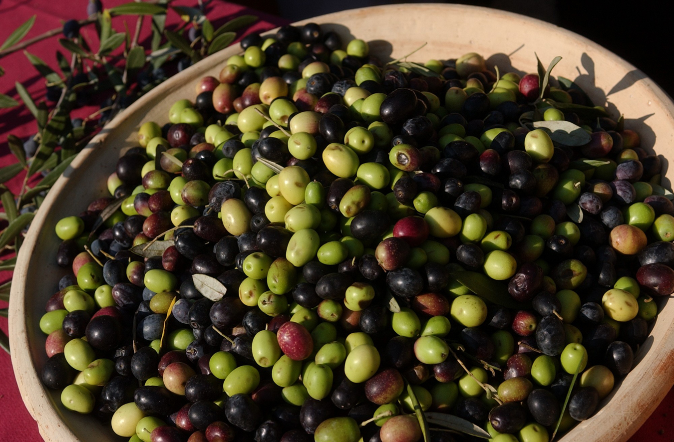Sonoma olives. (Photo courtesy of the Sonoma Valley Visitors Bureau)