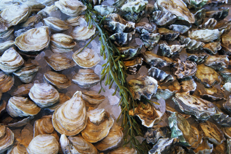 An array of fresh shellfish at Waterbar. (Photo courtesy of Val Atkinson)