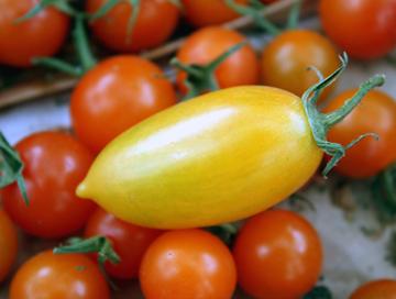 Baia Nicchia Farm's tomatoes.