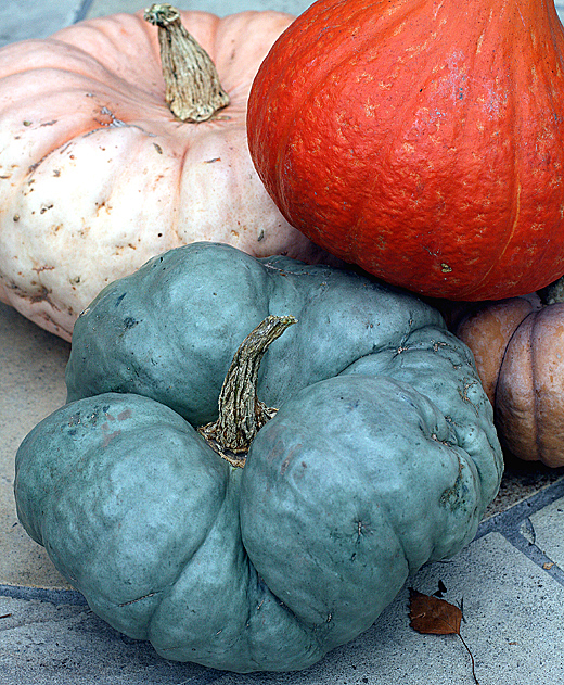 Baia Nicchia's unusual varieties of fall/winter squash.