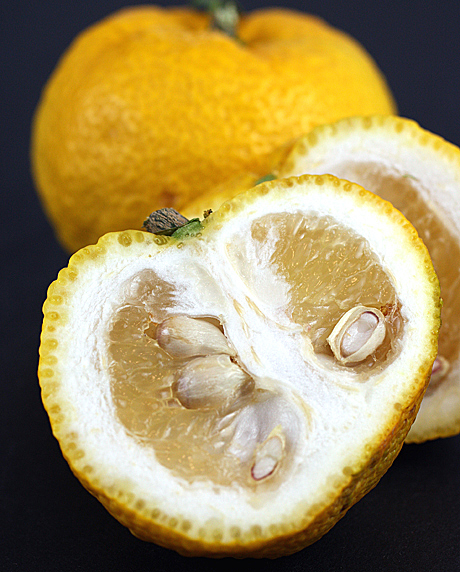 Japanese yuzu.