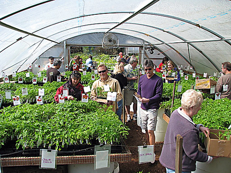 The scene at a previous seedling sale. (Photo courtesy of Love Apple Farm)