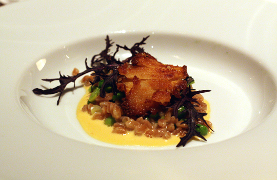 Crisp abalone on a bed of farro.