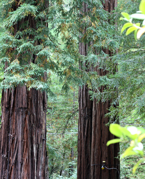 Soaring redwoods will leave you humbled.