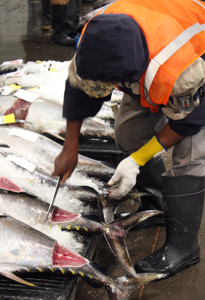 Before the bidding, each tuna is cut into, exposing a chunk of meat for bidders to evaluate.
