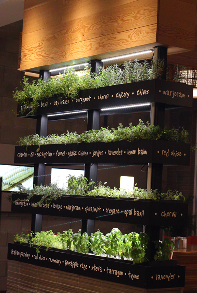 How many fast-casual places grow their own herbs on-site?