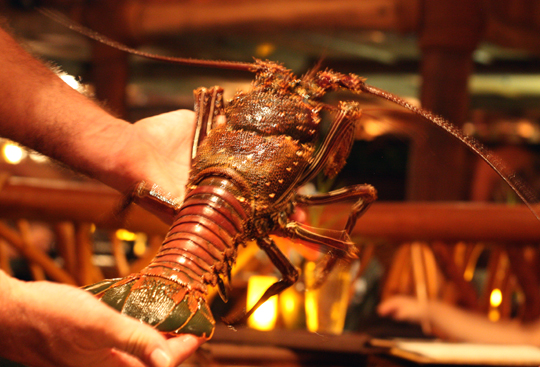 Live spiny lobsters are kept in a tank at the restaurant, where you can pick your own for dinner.