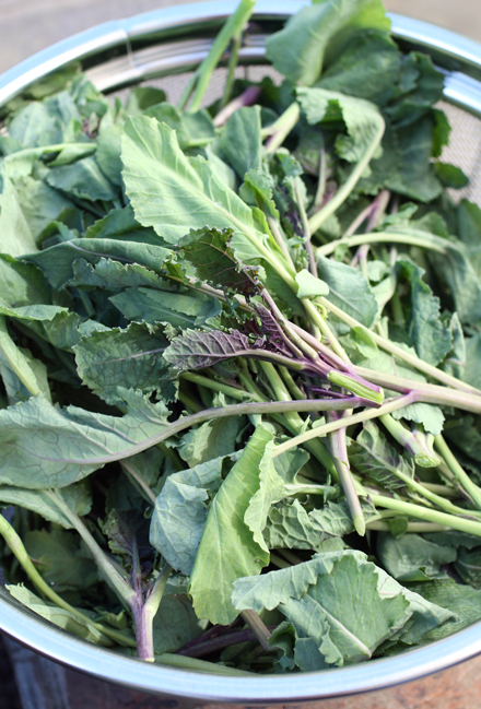 Highland kale, a staple in Ethiopia, now grown by Baia Nicchia Farm of Sunol.