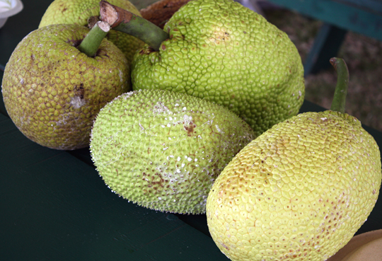 Two types of breadfruit. There are more than 100 varieties.