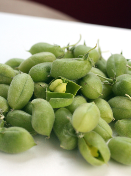 The fresh pods with the tiny beans inside.