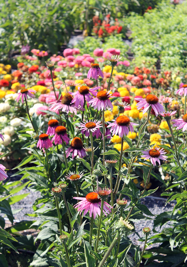 Flowers to encourage bees.
