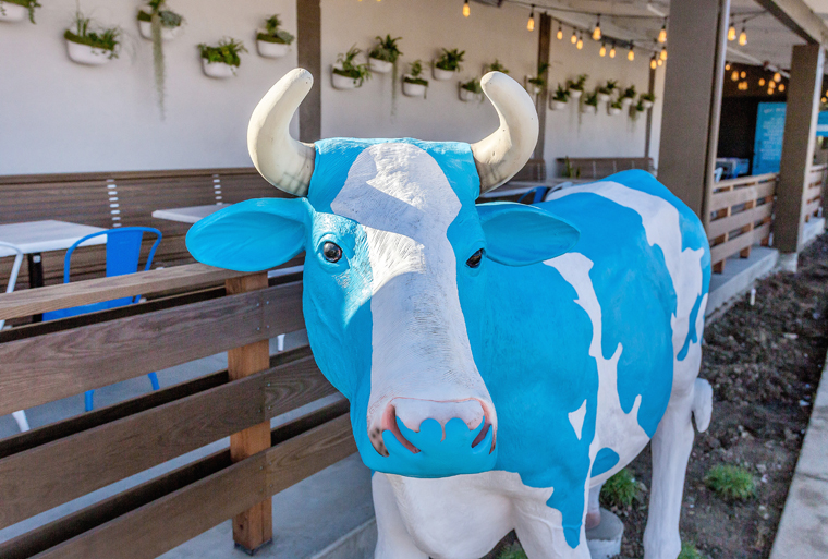 The mascot -- at the Campbell location. (photo courtesy of Mendocino Farms)