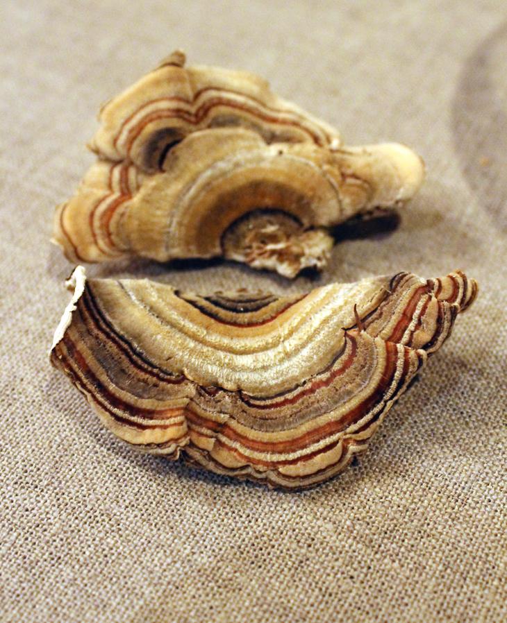 The intriguing turkey tail mushrooms.
