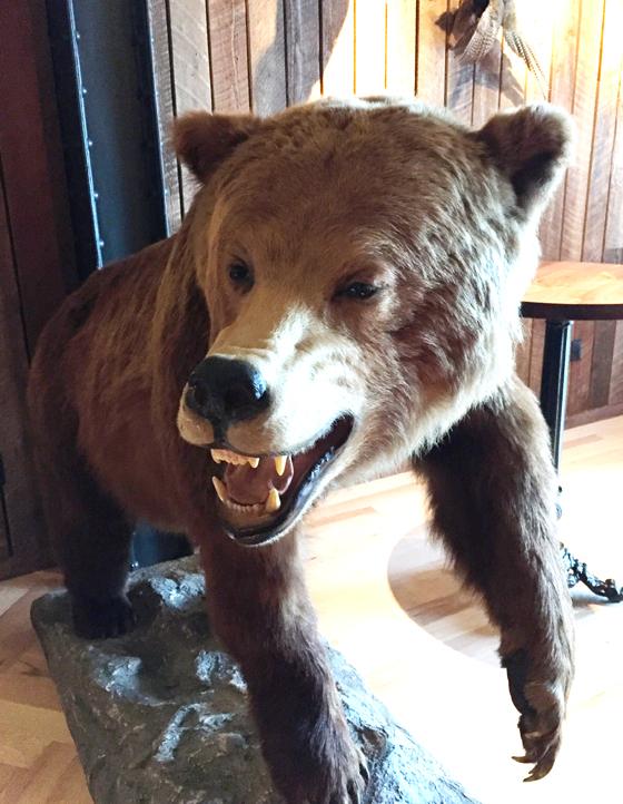 Even a bear.