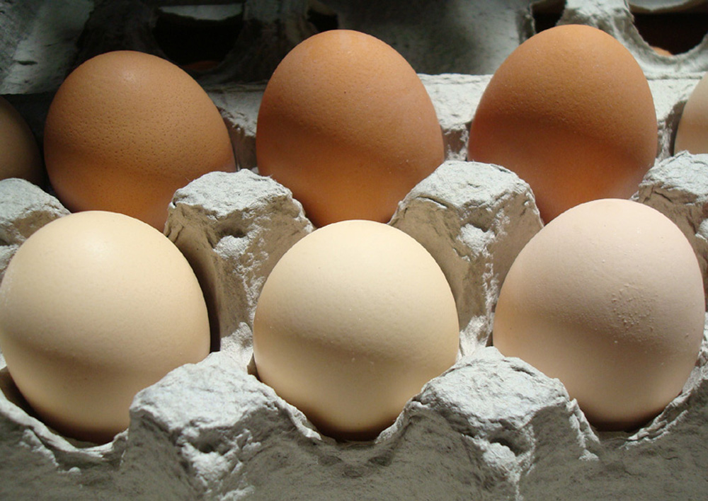 Fresh eggs, only two days old.