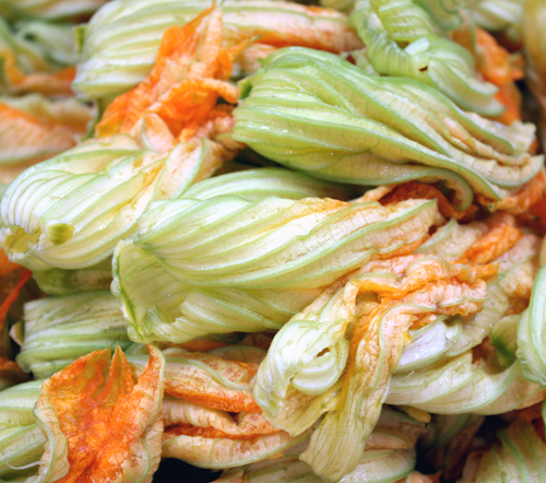 Squash blossoms for Castilian-style zucchini with eggplant and tomatoes.