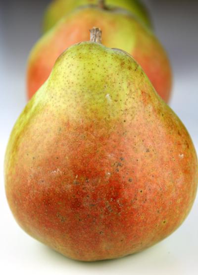 Royal Riviera pear