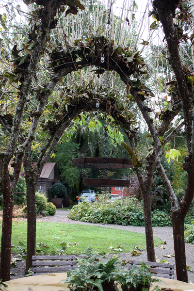 Tree branches shaped into arches.