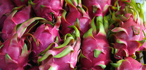 The unique dragon fruit. (Photo courtesy of Pitaya Plus)