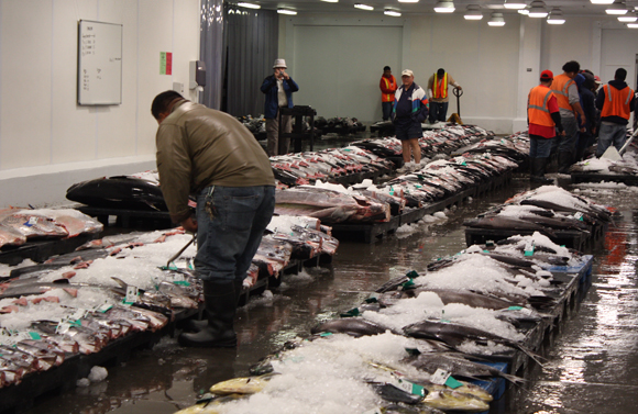 The action gets going at 5:30 a.m. at the Honolulu Fish Auction.