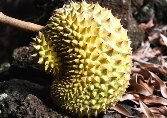 Can you guess what this is? It's banned on airlines because of its smell.