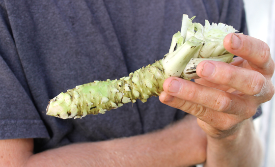 This is what real wasabi looks like.