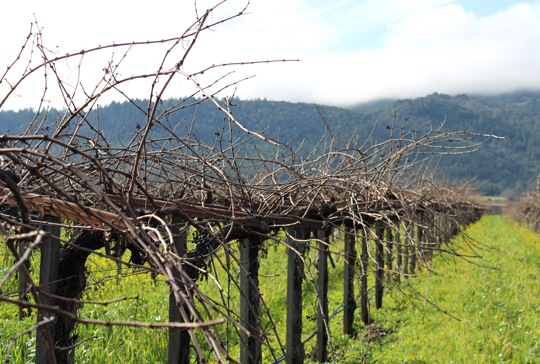 Vines in winter.