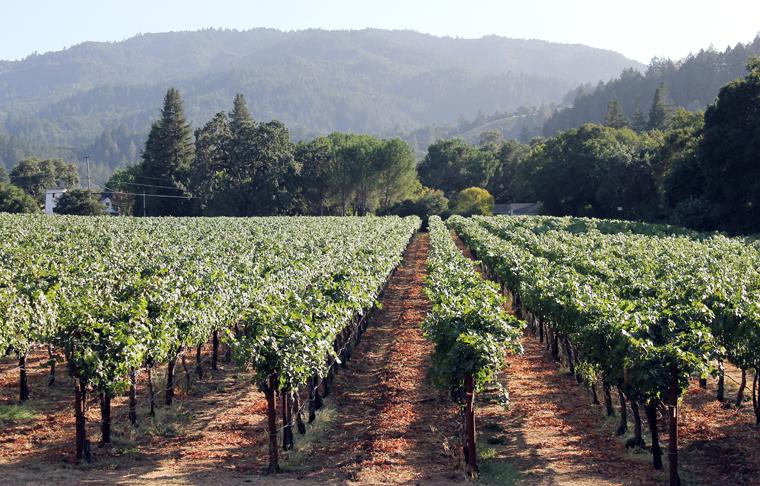 Beringer estate vineyard outside my room.