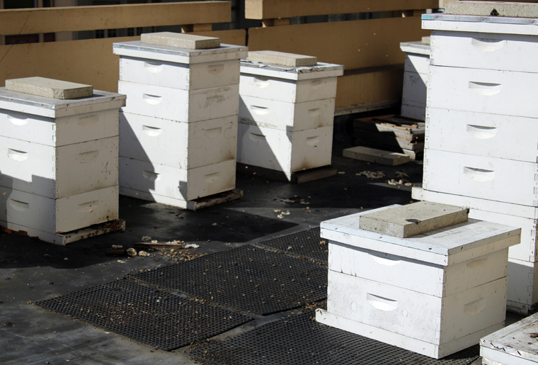 The bee hives.