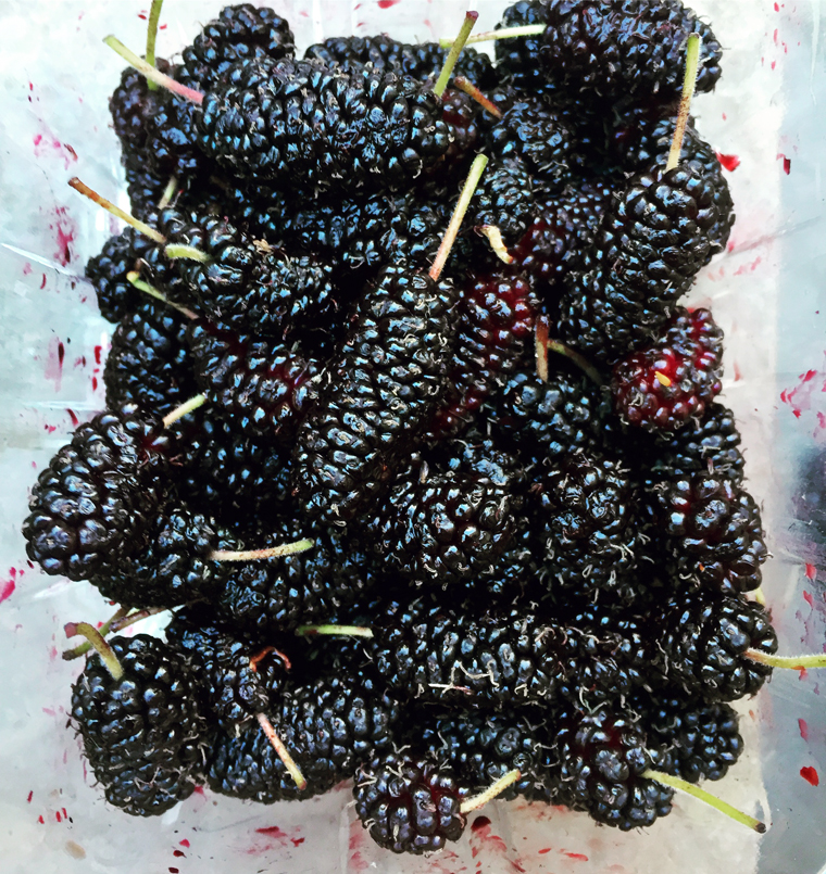Kevin Lynch is known for his home-grown mulberries. (Photo by Carolyn Jung)