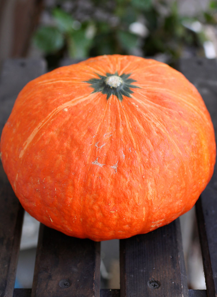 A beauty of a red kabocha squash.